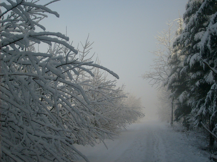 Januarmorgen (3)