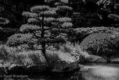 Japan Garden ...