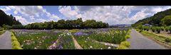 Japanes Iris Garden