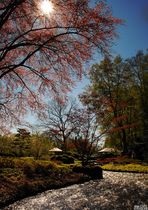 Japangarten im Frühling