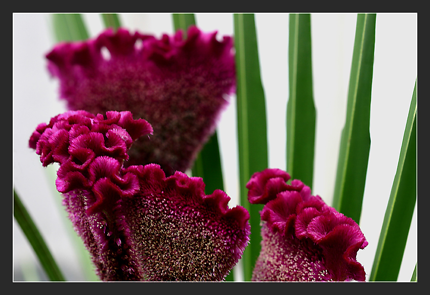 Japanische blumensteckkunst ikebana foto bild pflanzen for Japanische pflanzen
