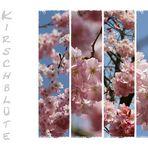 Japanische Kirsche...
