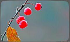 Japanische Zieräpfel