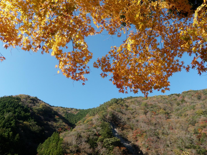 Japanischer Ahorn und Berg