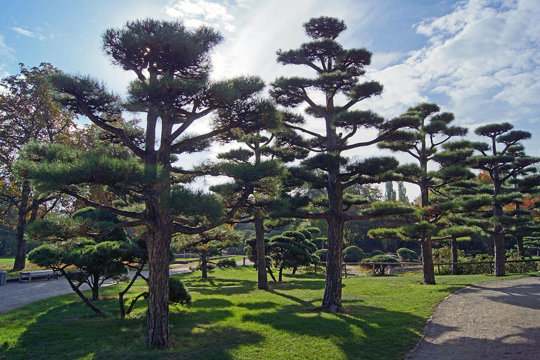 Japanischer Garten Foto Bild Park Bäume Natur Bilder Auf