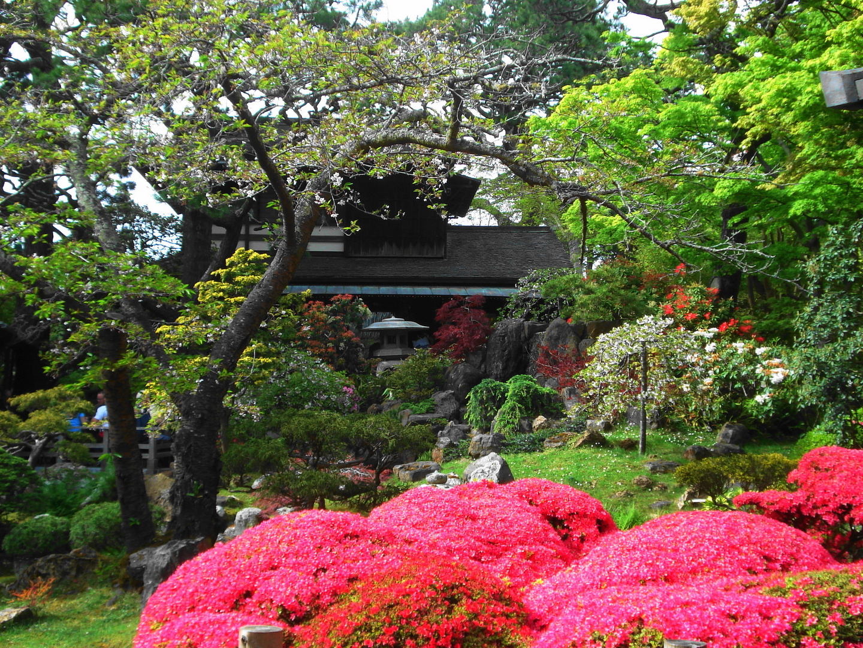 japanischer garten foto bild pflanzen pilze flechten b ume blatt bl te bilder auf. Black Bedroom Furniture Sets. Home Design Ideas