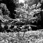 # japanischer Garten Düsseldorf 10 #