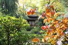 Japanischer Garten in Leverkusen