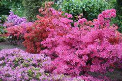 Japanischer Garten Leverkusen / Blütenpracht