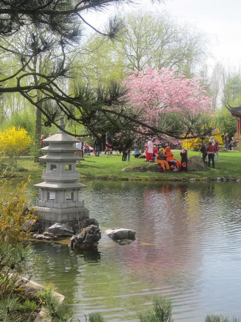 Japanisches kirschblütenfest berlin