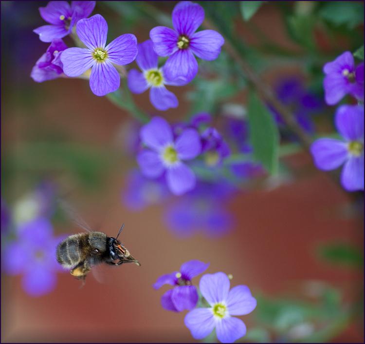 *japs* ... schnell zur nächsten Blüte...