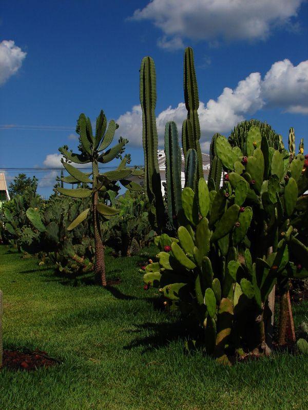 Jardim dos Cactus