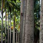 Jardín Botánico de Caracas