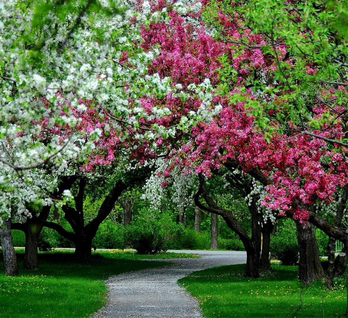Jardin Botanique. photo et image | arbres, nature Images ...