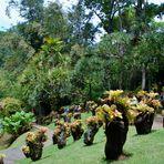 Jardin de Balata -1-