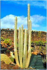 Jardin de Cactus # 2