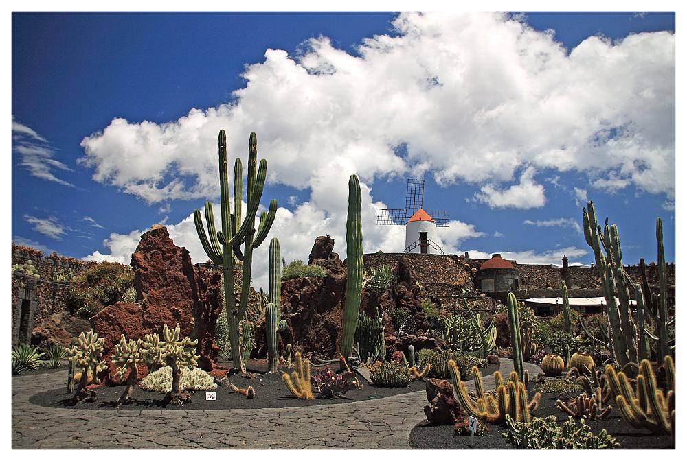 - Jardin de Cactus 2 -