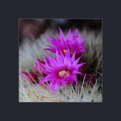 Jardín de Cactus 2