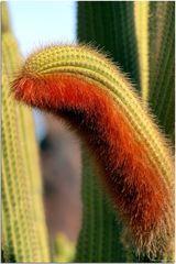 Jardin de Cactus # 3