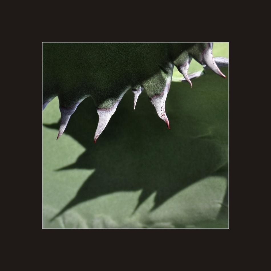 Jardín de Cactus 3
