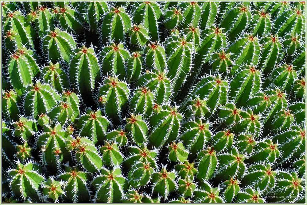 Jardin de Cactus # 4
