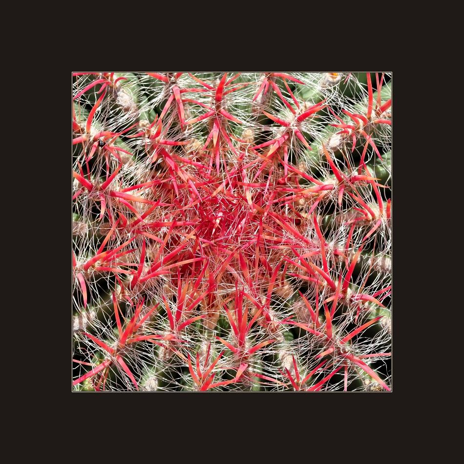 Jardín de Cactus 4