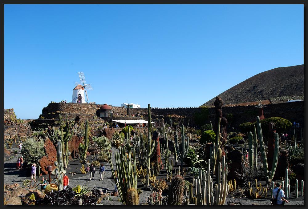 ...Jardin de Cactus...