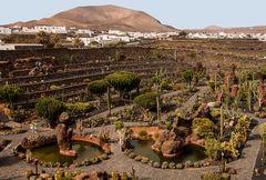 Jardin de Cactus II