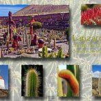 Jardin de Cactus Postal No. 1