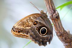 Jardin de Papillons - Grevenmacher