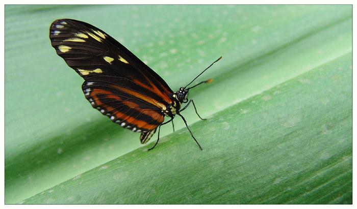 Jardin des Papillons...