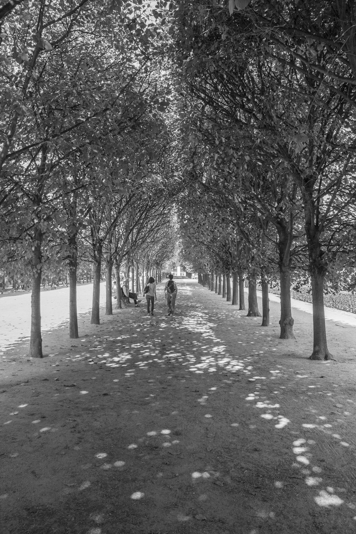 Jardin Du Palais Royal1