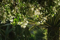Jardin Majorelle von Yves Saint Laurent in Marrakech 6