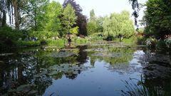 Jardin Monet mit Spiegelung