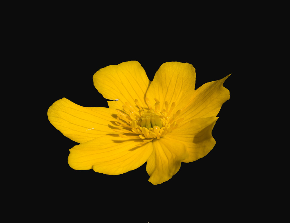 jaune !!!