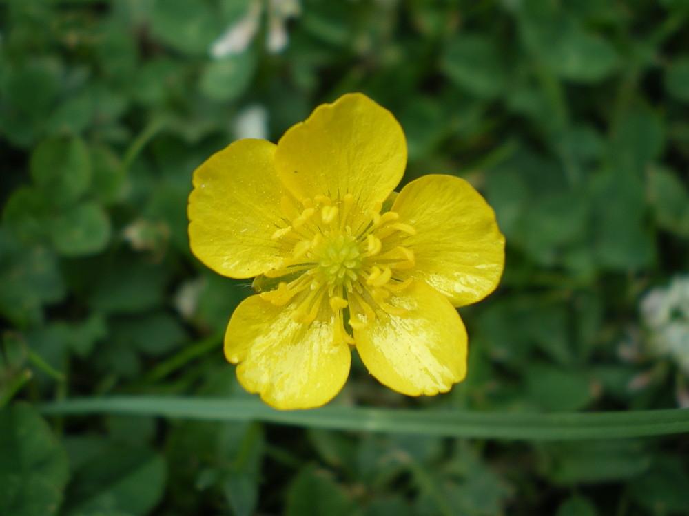 jaune d'oeuf
