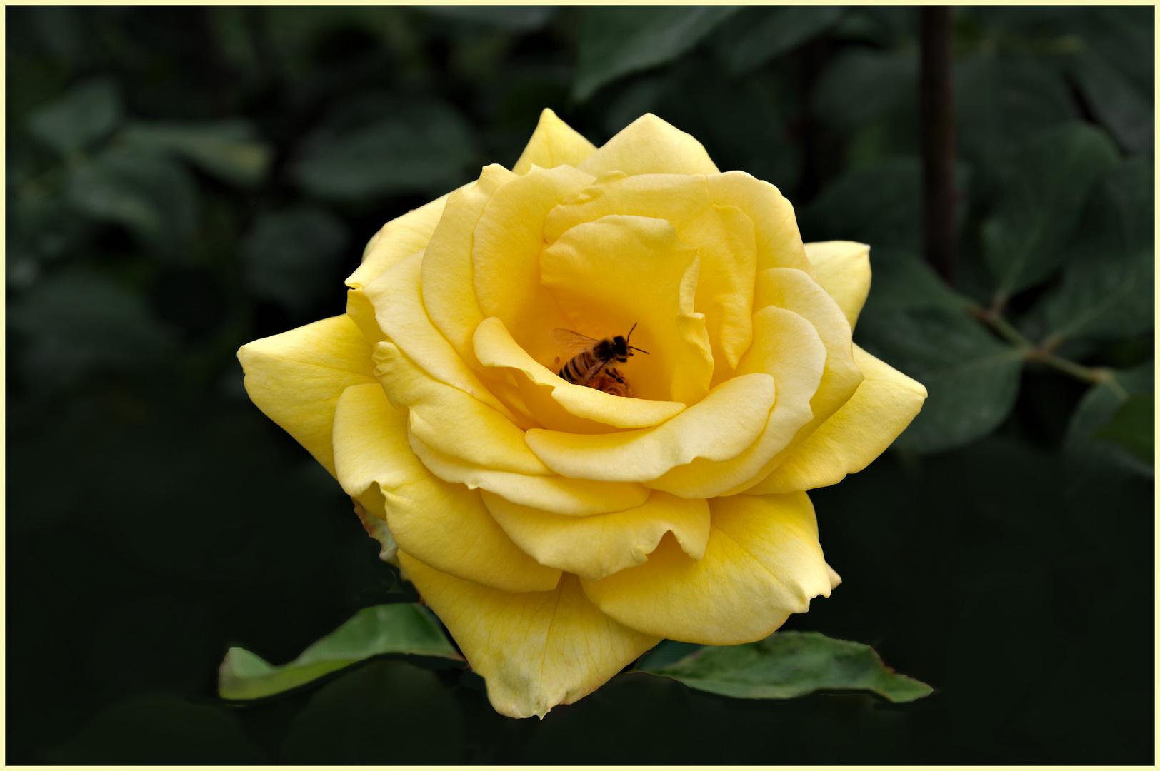 jaune sur jaune ......