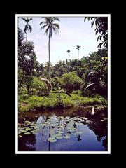 Jayapura 005