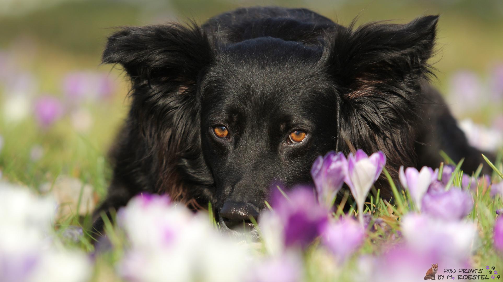 Jaycee im Blumenmeer
