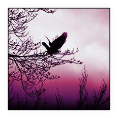 Jazzvogel