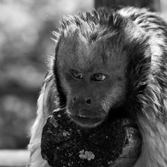 Je suis un singe malin !!!