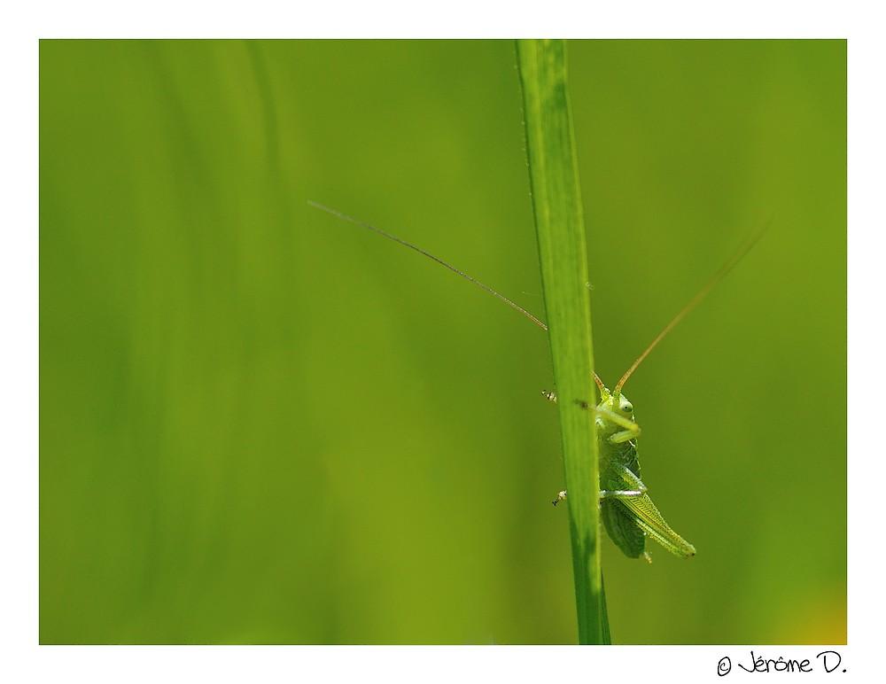 je vois la vie en vert