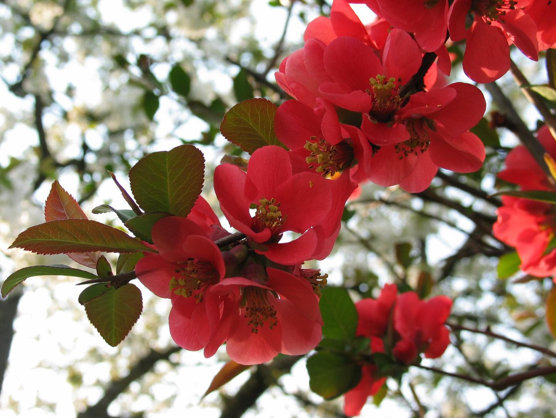 ...jede Blüte ein süsses Versprechen