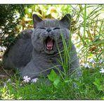 Jede Katze kommt mit einem starken Hang ...