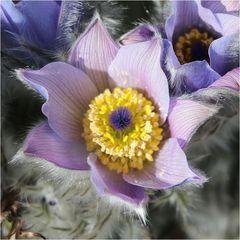 Jeden Frühling freu ich mich besonders ...