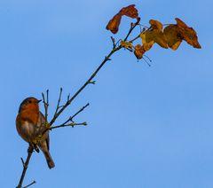 Jeder Mensch hat seinen Vogel.....oder auch zwei....#1642##