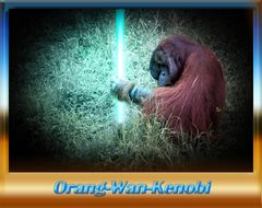 Jedi-Meister de Affen