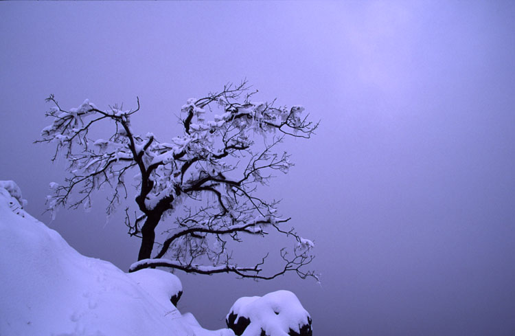Jégbe fagyva - Frost