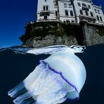 Jellyfish & castle