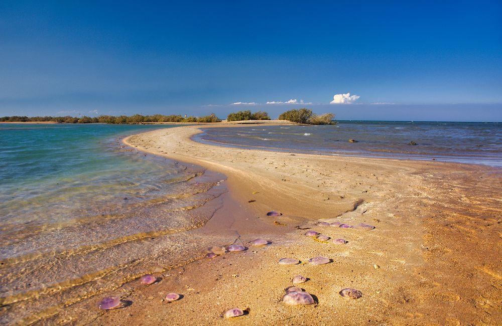 jellyfish island
